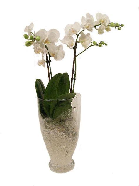 cura delle orchidee in appartamento consigli utili per la cura delle piante d appartamento