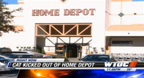 Home Depot Bluffton cat living in home depot for 13 years kicked out report