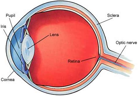cross section of the human eye royles opticians glossary of words you may encounter
