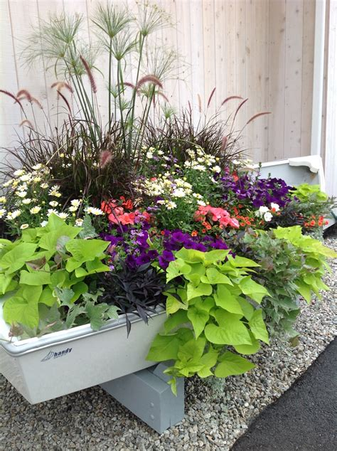 row your way to color with annuals carolyn s shade gardens