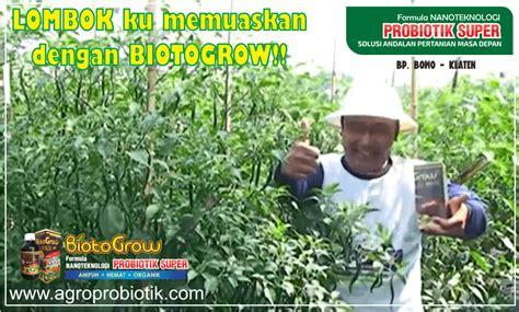 Pupuk Cair Hayati Biotogrow tanaman lombok memuaskan biotogrow