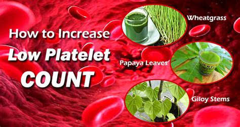 low platelet count in dogs how to increase a low platelet count fast