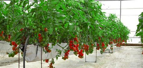coltivazione idroponica in casa idroponica giardini senza terra in casa scopriamoli insieme