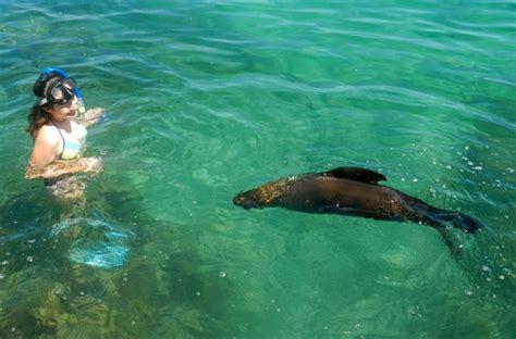 cadenas blue ventures splashing with sea lions on isabella island best world yet