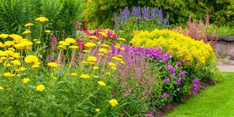 summer flowers the most popular blooms for every month 18 best summer flowers beautiful flowers that bloom all