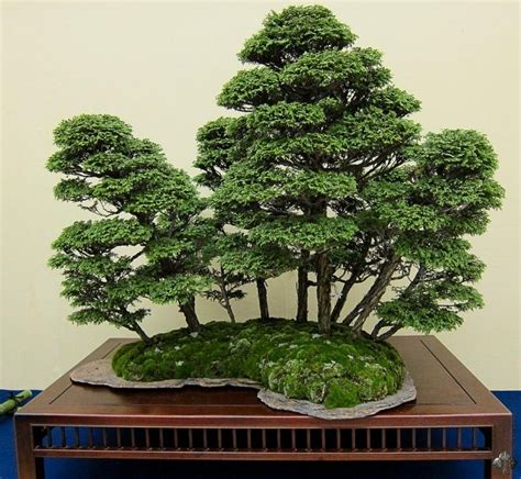 Garten Kaufen Uhingen by Stunning Forest Styled Bonsai Displayed At The Kokufuten