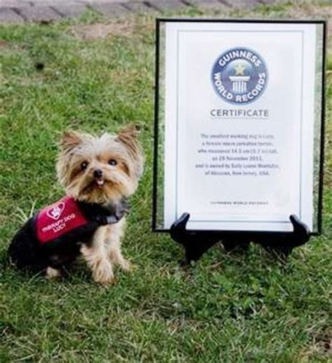 the smallest yorkie in the world top 10 smallest animals in the world