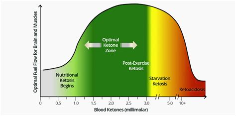 ketosis 2 manuscripts in 1 book the keto crockpot burn rapid loss in 4 weeks delicious recipes that you can cook at home books blood ketone level clarification ketogenic forums