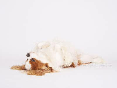 freebies minneapolis saint paul minnesota dog & pet