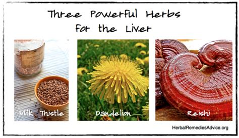 Herbs To Detox Liver by Liver Cleanse