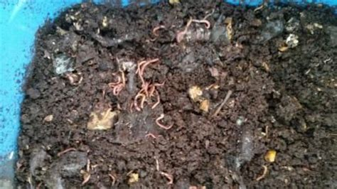 types of garden worms 1000 images about garden ideas on
