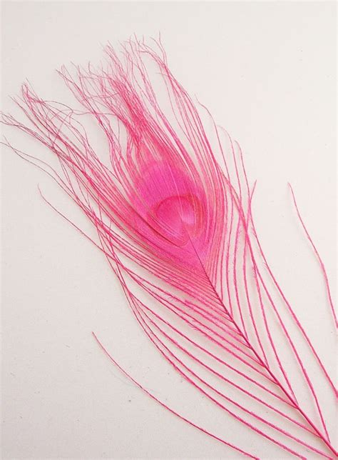 new pink lovely peacock feather with bow cotton baby 99 best images about peacock stuff on peacocks