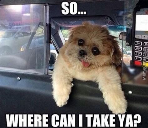 Taxi Meme - taxi memes best collection of funny taxi pictures