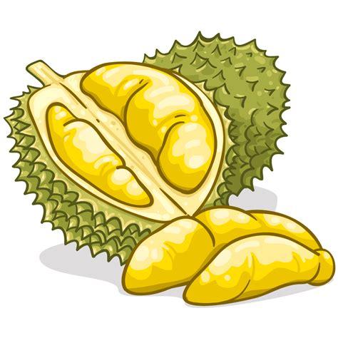 Bibit Terong Genjah budidaya durian cara atau teknik penanaman durian