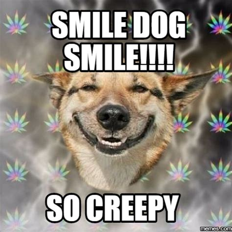 Smiling Dog Meme - creepy dog smile 98921 bursary