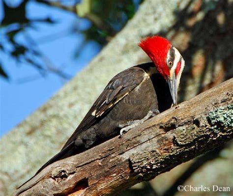 birding trails tennessee wildlife resource agency