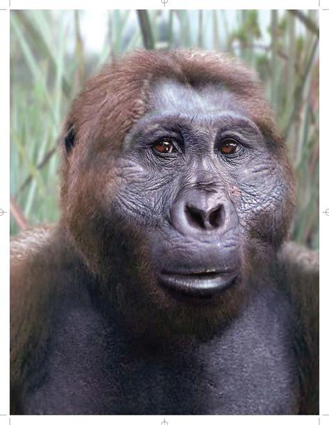 the last human a guide to twenty two species of extinct humans ebook paranthropus boisei images from the last human a guide