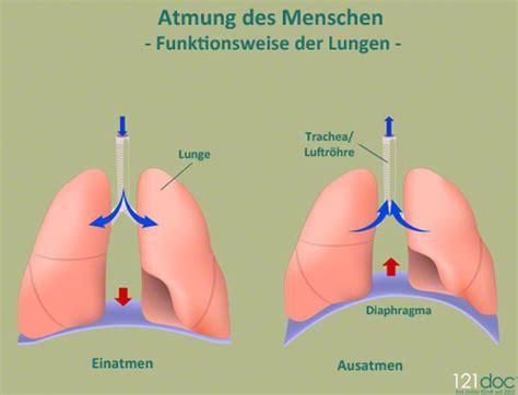 und innere atmung die atmung des menschen 121doc de
