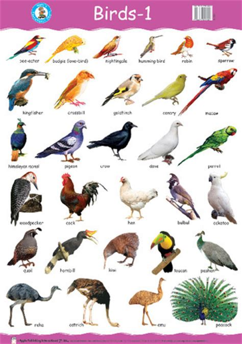 birds pic with names