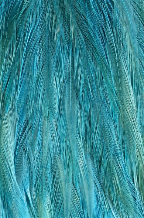 beautiful pattern texture feather texture more texture pinterest feathers