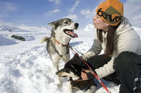 Honk If You Think Is Neat O Fortunes No 1 by 6 Active Dogs 7 Facts On Huskies Lifestyle