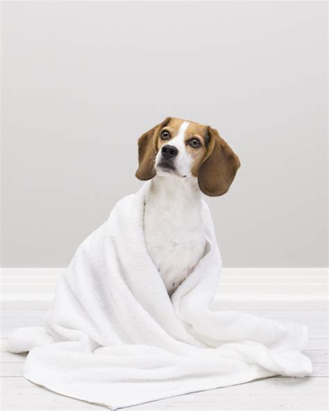 bathing a puppy wellness how to bathe a and some pawsh magazine