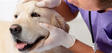 10 Tips for a Successful (and Less Stressful) Vet Visit