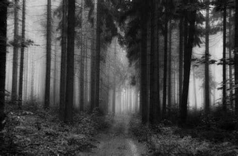 imagenes de paisajes que den miedo imagenes de bosques que den miedo imagui