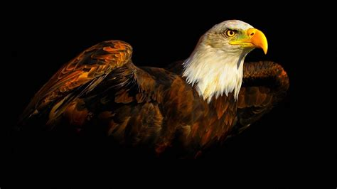 eagle wallpapers hd wallpapers