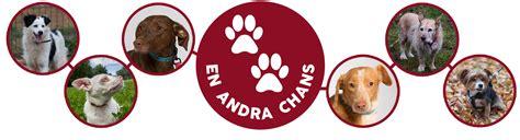 Hem Raisha en andra chans med fokus p 229 heml 246 sa hundar