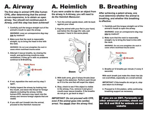 heimlich for dogs cpr for your pet tfe times