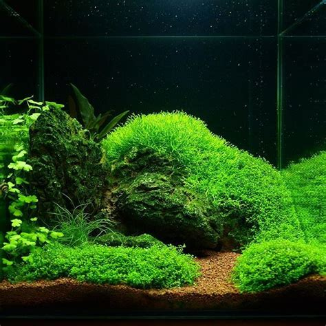 aquascape plant 17 best images about aquascaping on pinterest underwater