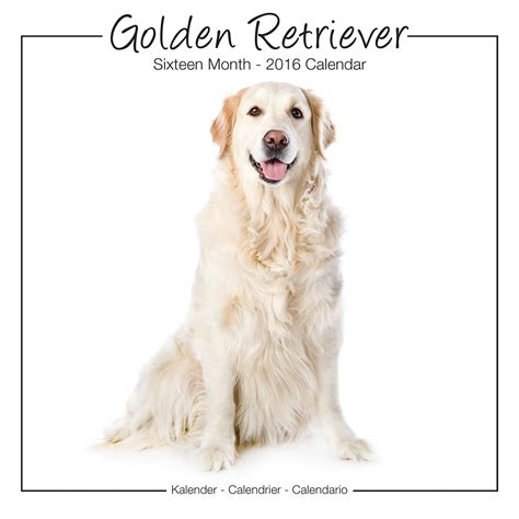 golden retriever puppies price range golden retrievers studio range calendar 2016 pet prints inc