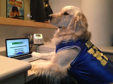 air bud exclusive air bud predicts who will win the bowl in the s