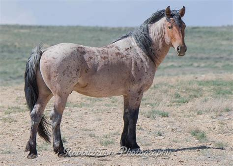 pictures mustang horse with smoke mustang mustangs america s horse pinterest mustangs