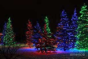 christmas tree lights photograph by helen bobis