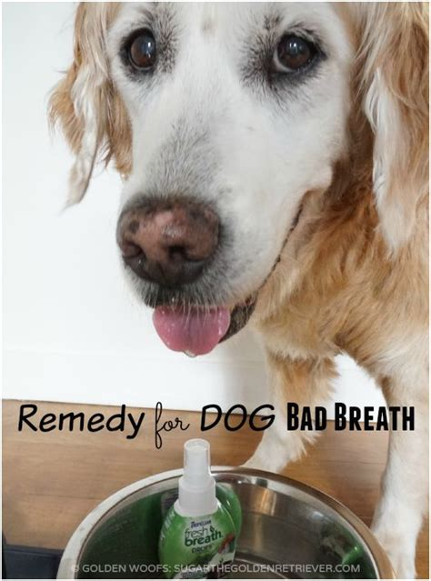 bad breath in dogs remedy for bad breath tropicleanfresh breath drops golden woofs