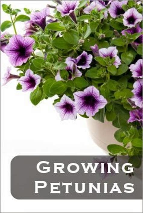 planting posies lll how to grow dreaming gardens