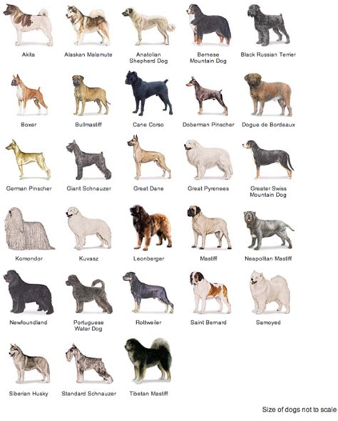 american kennel club dog breeds working dogs american kennel club breeds stone fox pinterest working dogs dog and dog breeds