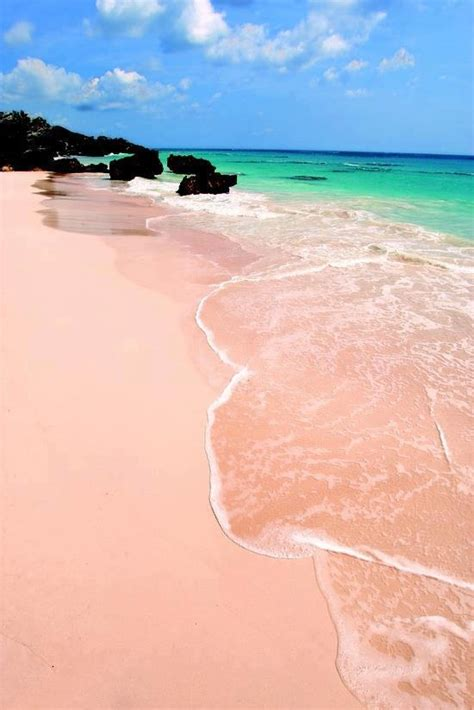 pink sand beach pink sand beach bermuda corner of the world