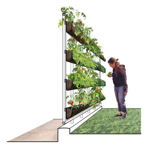 Vertical Gardens Wa Tree And For Homeowners And Professionals A