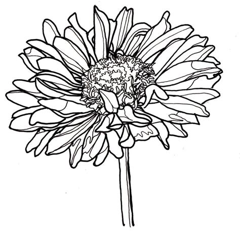 doodle line drawings best 25 flower line drawings ideas on flower
