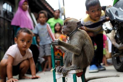 Sho Buntut Kuda kekejaman di balik kelucuan topeng monyet sachiko