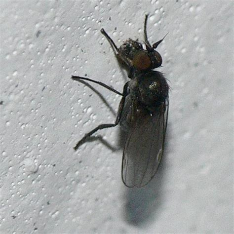 tiny black flies in house house decor ideas