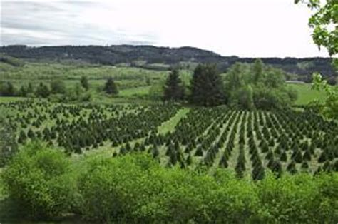 best christmas tree farm applehill prices earn growing trees in your backyard profitable plants digest