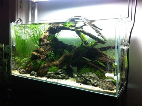 Freshwater Aquarium Design Ideas by Marvelous Fish Tank Ideas Freshwater 42 With Additional Home Decor Ideas With Fish Tank Ideas