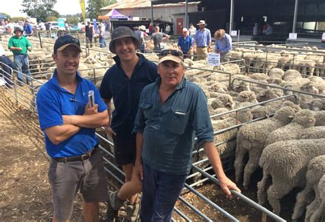 awn wool broker s bale to retail passion farm online