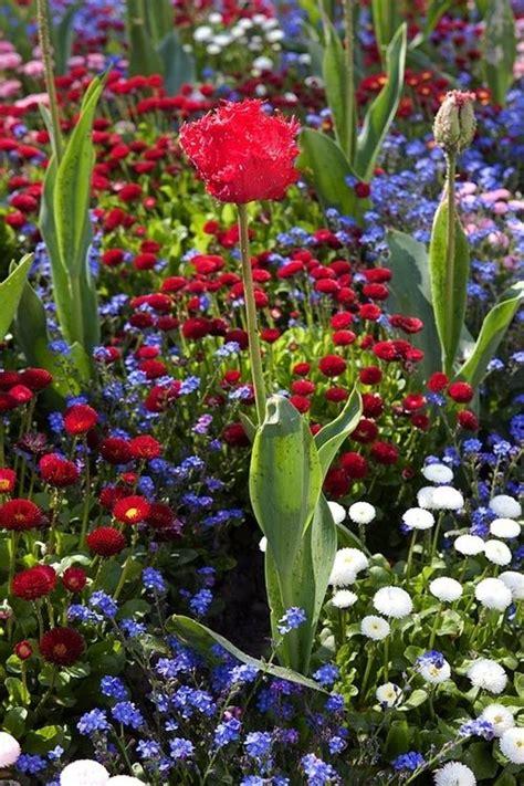 Blue Flower Garden White Blue Flower Garden Freedom Cottage Gardens Beautiful And