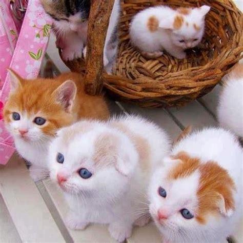 Boneka Kucing Imut Lucu Terbaru gambar dp bbm kucing bergerak menggemaskan lucu gokil dan