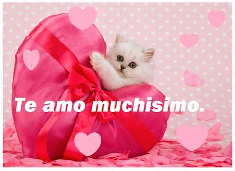 imagenes de te extraño gatitos bonitos mensajes en im 225 genes hermosas de gatitos para